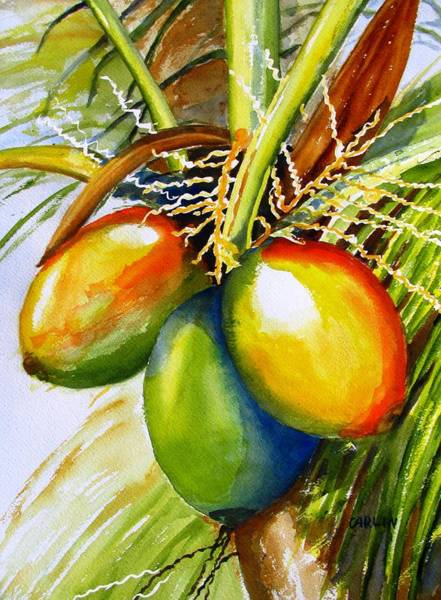 Painting - Coconuts by Carlin Blahnik CarlinArtWatercolor
