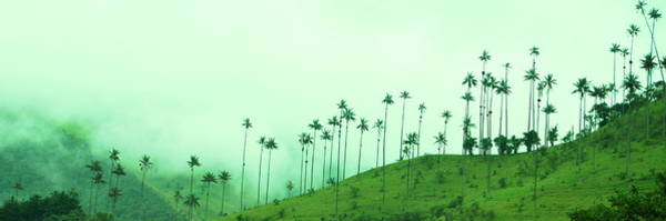Brillante Photograph - Cocora Valley by HQ Photo