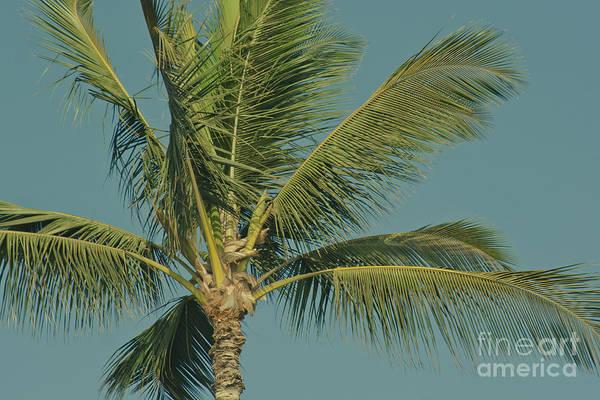 Palm Frond Digital Art - Cocos Nucifera - Niu - Palma - Po'olenalena Beach Maui Hawaii by Sharon Mau