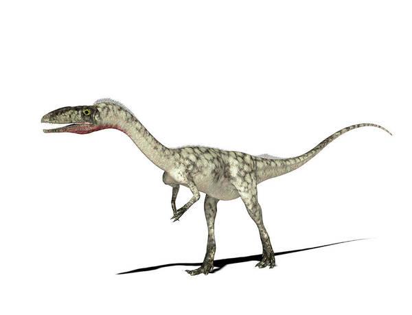 Paleozoology Wall Art - Photograph - Coelophysis Dinosaur by Friedrich Saurer
