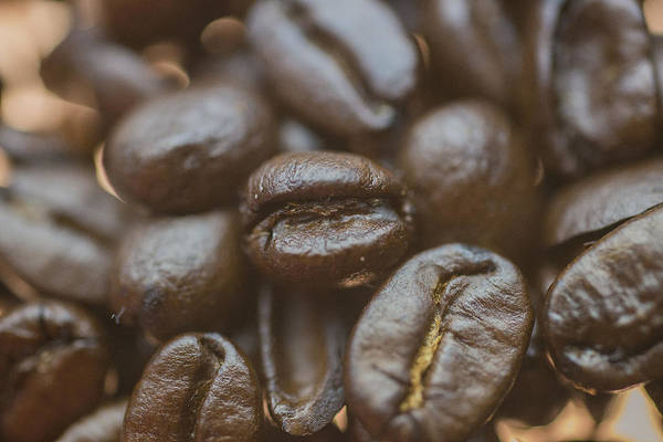 Photograph - Coffee Bean Macro by David Haskett II