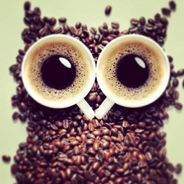 Wall Art - Photograph - Coffee Owl #coffee #owl #pinky by May Pinky  ✨