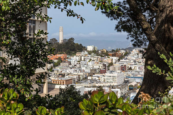 Photograph - Coit Tower View by Kate Brown
