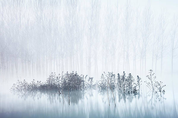 Cold & Foggy Morning In The Swamp Art Print