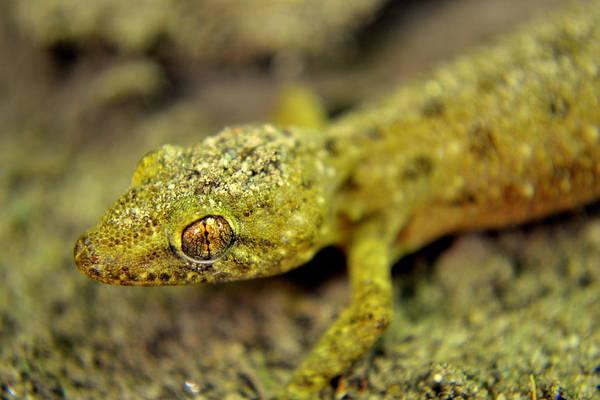 Wall Art - Photograph - Reptile Lizard Close Up by Salman Ravish