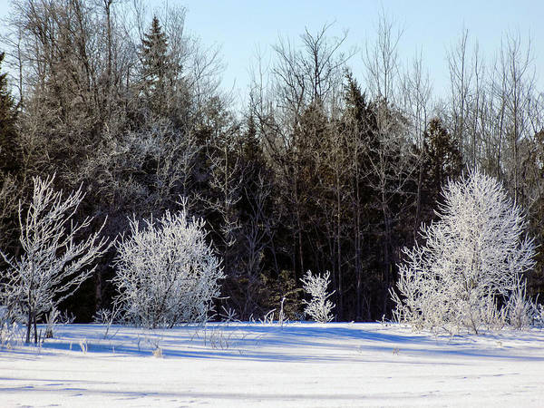 Aroostook Photograph - Cold Magic by William Tasker