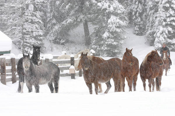 Photograph - Cold Ponnies by Diane Bohna
