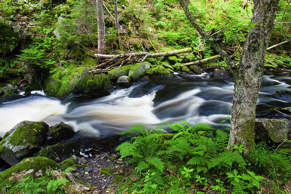 Cold Stream In Maine's Northern Forest Art Print