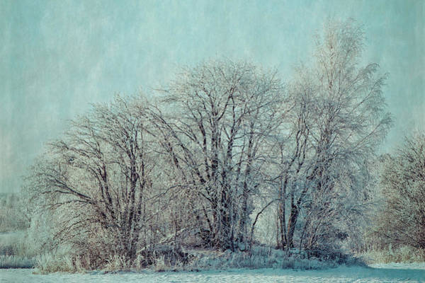 Photograph - Cold Winter Day by Ari Salmela