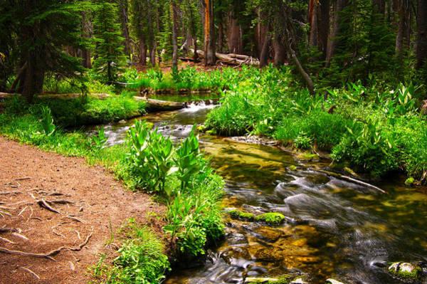 Photograph - Coldwater Creek By Frank Lee Hawkins by Eastern Sierra Gallery