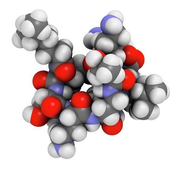 Molecular Wall Art - Photograph - Colistin Antibiotic Drug Molecule by Molekuul/science Photo Library