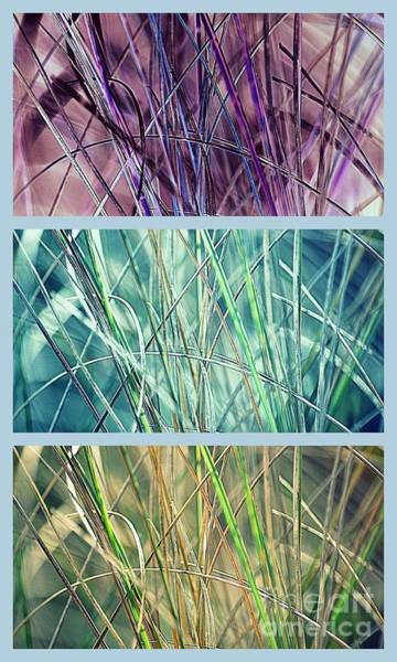 Photograph - Collage Of See Grass by Susanne Van Hulst
