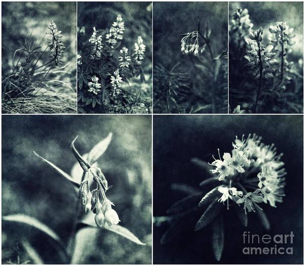 Wall Art - Photograph - Yukon Wild Flower Collage by Priska Wettstein
