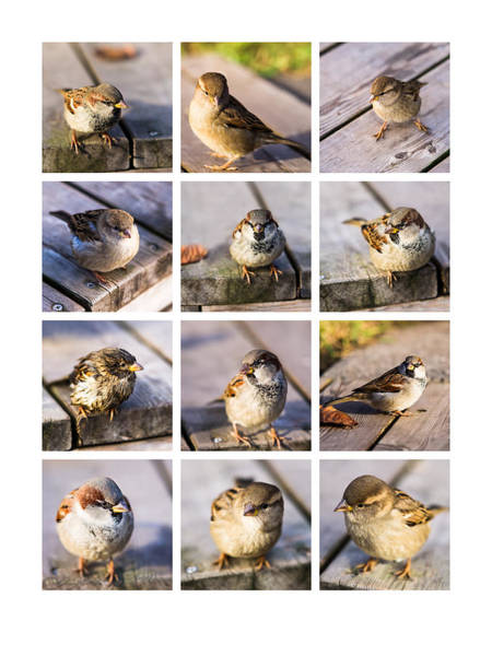 Chirping Photograph - Collage Twitting Friends by Alexander Senin