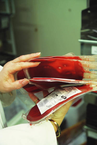 Wall Art - Photograph - Collecting Baby Blood Bags by Antonia Reeve/science Photo Library