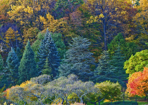 Photograph - Collection Of Autumn Colors by Gary Slawsky