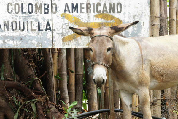 Bamboo Photograph - Colombia, Minca Mule And Sign by Matt Freedman