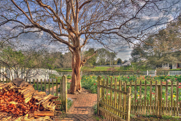 Photograph - Garden In Eastern Virginia by Jerry Gammon