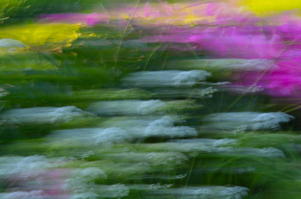 Photograph - Color Blown by Michael Hubley