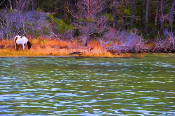 Photograph - Color By The Water by Alice Gipson