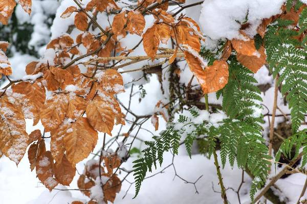 Photograph - Color In The Snow by David Birchall