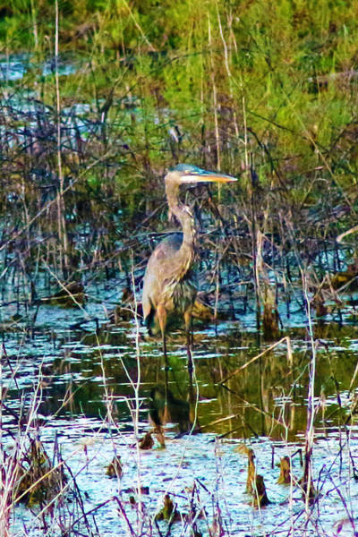 Photograph - Color Me Heron In Watercolor by Lorna R Mills DBA  Lorna Rogers Photography