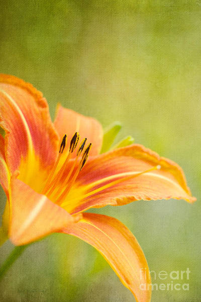 Photograph - Color Me Summer Sunshine by Beve Brown-Clark Photography