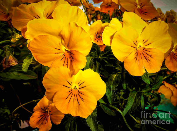 Photograph - Color Me Yellow by Dave Bosse