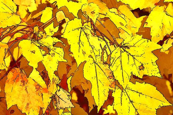 Photograph - Color Of Fall by Ludwig Keck