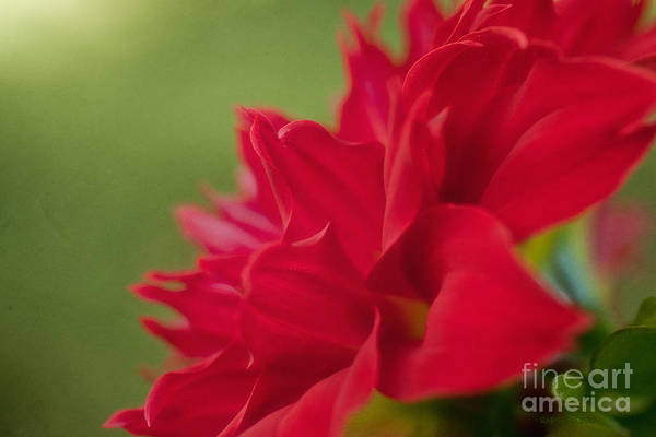 Photograph - Color Of Love by Beve Brown-Clark Photography