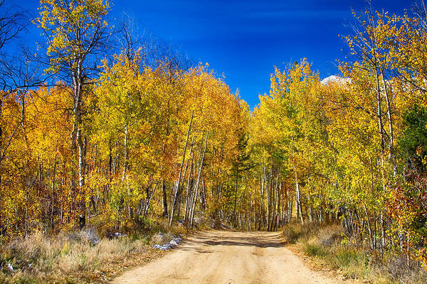 Photograph - Colorado Autumn Back Country Road by James BO Insogna
