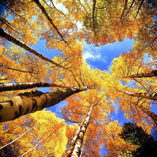 Photograph - Colorado Autumn Sky by OLena Art Brand