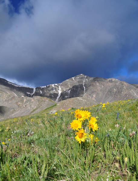 Photograph - Colorado Beauty by Aaron Spong