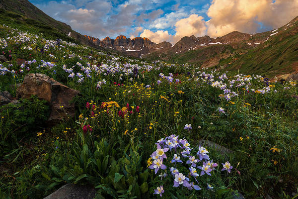 Wall Art - Photograph - Colorado Columbine by Guy Schmickle
