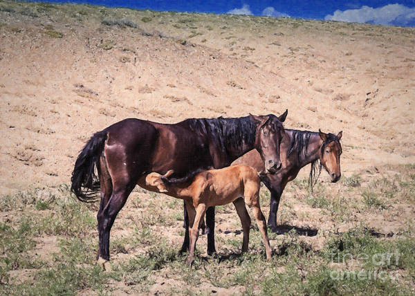 Crazy Mountains Painting - Colorado Desert Mustangs by Janice Pariza