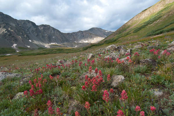 Photograph - Colorado Early Morning Summer Landscape With Gray's Peak by Cascade Colors