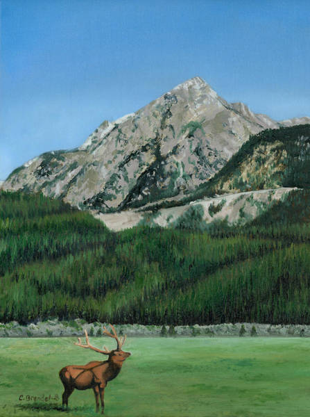 Wall Art - Painting - Colorado Elk by Cecilia Brendel