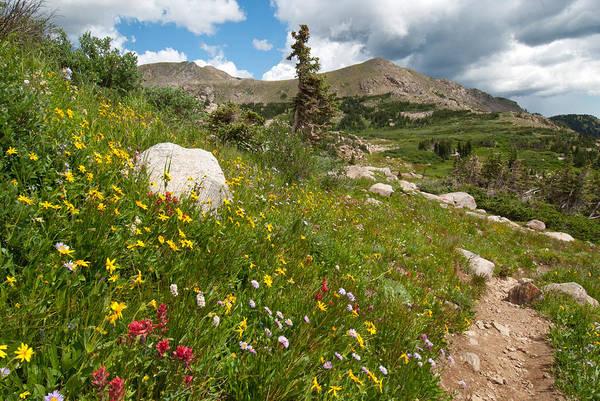 Photograph - Colorado Mountain Summer by Cascade Colors