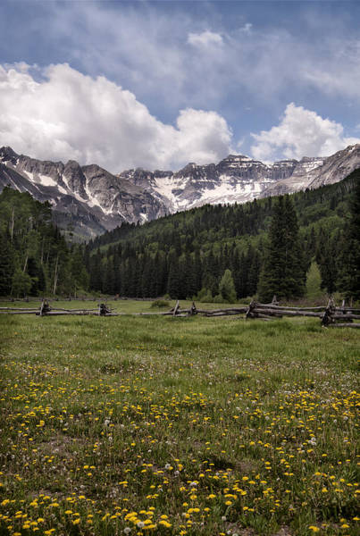 Photograph - Colorado Mountains And Wildflowers by Melany Sarafis