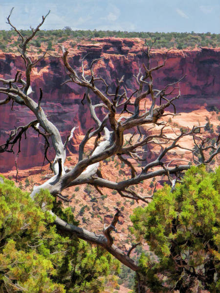 Painting - Colorado National Monument Dead Branches by Christopher Arndt