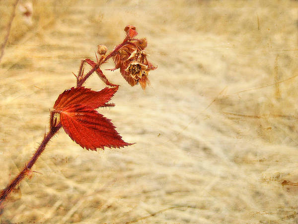 Photograph - Colorado Red Autumn Leaf by Julie Magers Soulen
