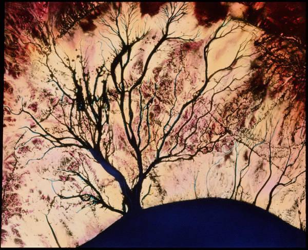 Colorado River Delta Art Print