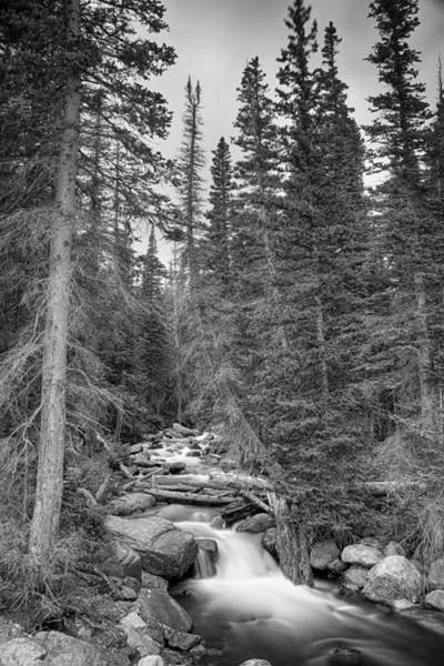 Photograph - Colorado Rocky Mountain Flowing Stream Bw by James BO Insogna