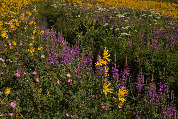 Photograph - Colorado Summertime by Susan Rovira