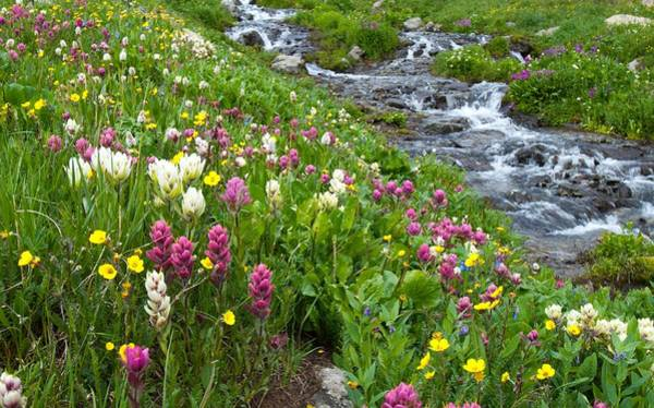 Photograph - Colorado Wildflower Meadow And Stream by Cascade Colors
