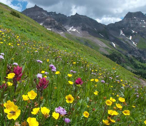 Photograph - Colorado Wildflowers And Mountains by Cascade Colors