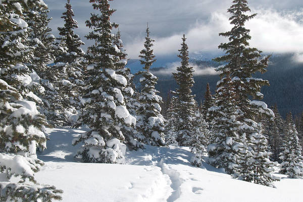 Photograph - Colorado Winter Morning Forest With Rising Clouds by Cascade Colors