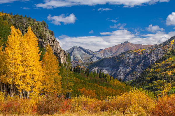 Photograph - Colorado's Carpet Of Color by Darren  White