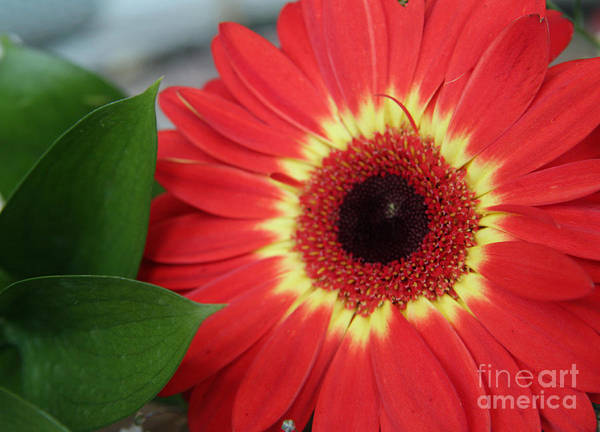 Photograph - Colorburst  by Mary Lou Chmura