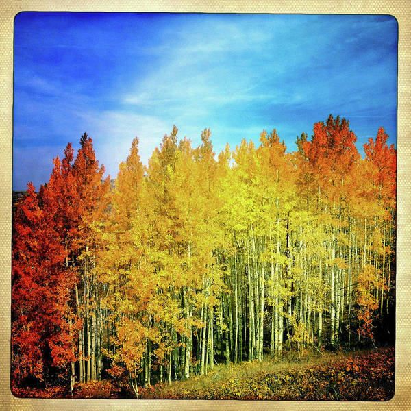Steamboat Springs Photograph - Colorful Aspen Trees by Karen Desjardin